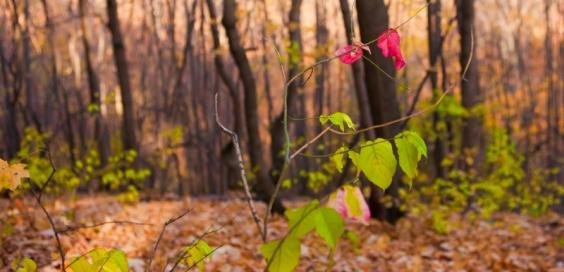 stockvault-autumn-scene125352