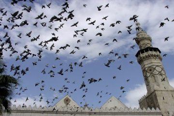 mengenal-imam-ibnu-asakir
